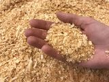 Rumegus de lemn la sac/древесные опилки