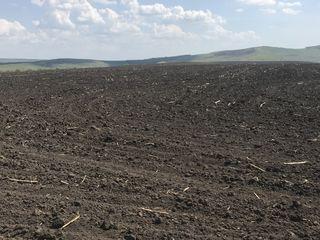Teren agricol 150 ha