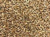 пшеница в мешках 2,7 лей за кг
