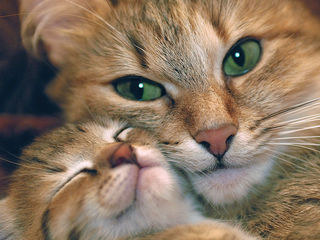 Платная передержка для кошек, грызунов и птиц!