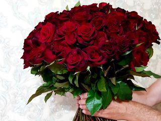 Trandafiri la doar 5 lei/buc