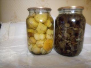 грибы белые и опята