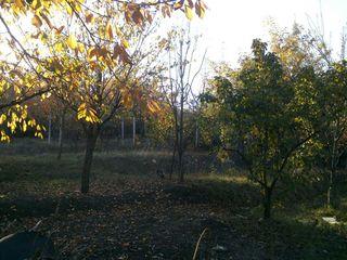 Lot de pământ Dumbrava , 2 km de la Chisinau !