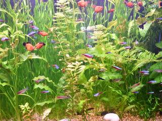 Большой аквариум из оргстекла