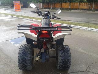 Suzuki T-Rex