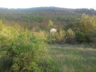 Vanzare teren amplasat in raionul Criuleni, com. Miclesti!!! 3500 €