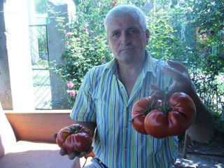 Toматная паста и аджика из экологических томатов сорта бычье сердце