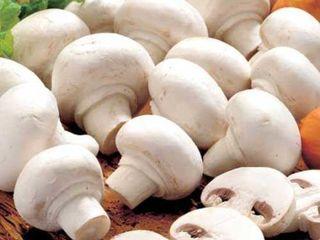 Продажа грибами от производителя!