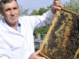 Продаю пчелосемьи и отводки