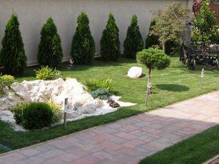 Plante vii, amenajare curte, spații verzi