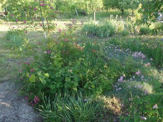 Teren pomicol 30 ari (5 terenuri consolidate) (11 km de la Chisinau), zona ecologica (lac si padure)