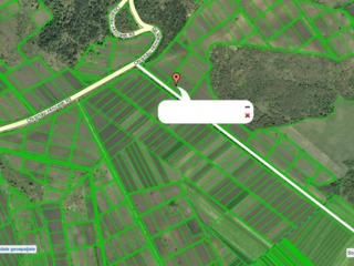 Vindem 4 terenuri - 2 cu vita de vie si 2 teren arabil prima linie de la soseaua Hincesti-Chisinau