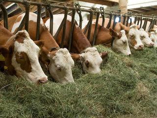 Займ под покупку корма для животных
