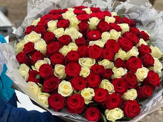 Trandafiri Moldovenesti, 101 trandafiri ; crizanteme eustome