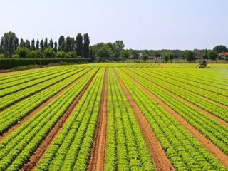 vind 12 hectare-pamint arabel-60.000 evro