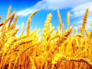 Куплю сельхоз землю