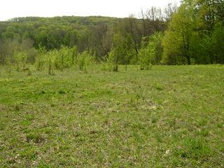 поляна в лесу село Каприяна 1,4 Ге