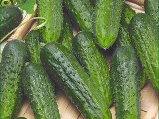 Seminte de legume si flori in asortiment! calitate garantata!  ''Diolsem''  Angro