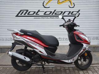 Moki Falcon