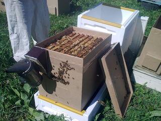 Принимаю заказы на 2019 - отводки пчёл и пчелиные матки