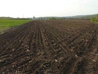 Teren arabil 7.62 ha (Tintareni Anenii-Noi)