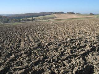 Cumpăr cote de teren agricol s. Cocieri r-nul Dubăsari