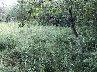 Lot de Vila sau Casa la Intovarasirea Pomicola ,,LITERATOR'',linga satul Riscova,rl. Criuleni.