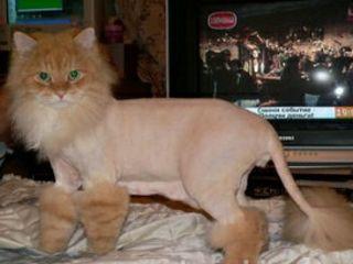 Стрижка кошек и мелких собак!!! Ветеринарная клиника