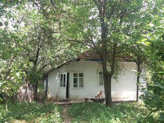 Proprietate casă de locuit+ casă de vară+ teren agricol