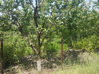 vindem 2 loturi de pamint(12 ari)in sinul naturii.foarte aproape de orasul Ungheni.