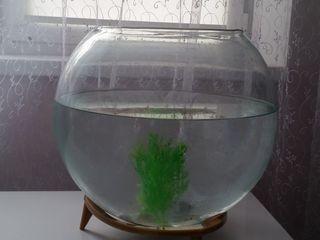 Круглый аквариум на 20 литров.