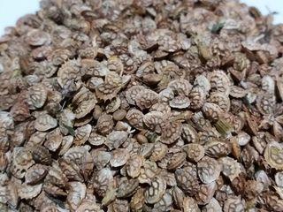Продам  семена эспарцета..сорт песчянный.