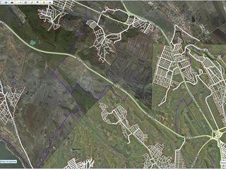 padure ( участок леса )