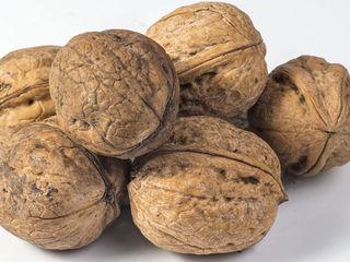 Продам орехи не чищенные, прошу 35 лей за 1 кг. (сотня). Свыше 5 кг. доставка по г. Кишинёву