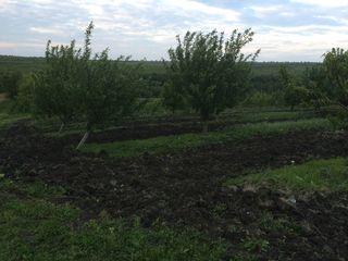 Teren agricol, livada, iaz, prisaca, mini ferma
