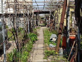 Vila pe malul Nistrului Varnița