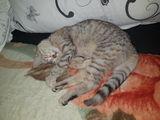 Urgent!!! pisicuță în mâini bune!!!