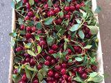 Cumpar  visina caise persic prune local si export