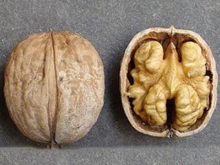 Продам сорт ореха Калараш