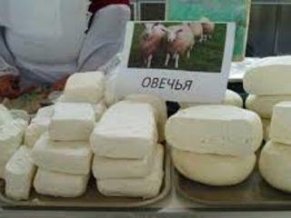 куплю брынзу овечью до 50 кг, по 35 лей кг