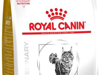 Royal Urinary Feline S/O