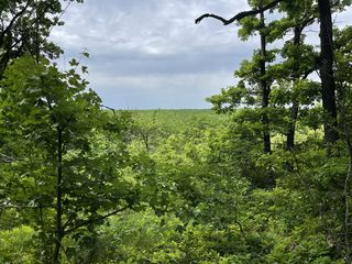 1 ha de pădure sub construcție