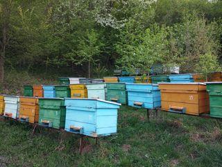 Familii de albine, stupi.