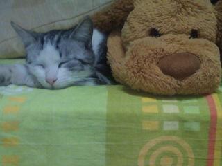 Кот Темошка (метис) мраморный