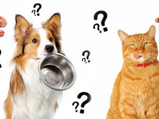 Hrana uscata pentru cîini si pisici.Корм для собак и кошек.Сonserve.Консервы.