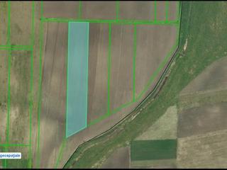 Pamint arabil (50 ha)