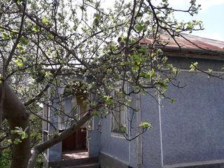 Urgent casa se afla in centru satuli gribova