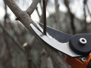 Curatim copaci Чистка деревьев