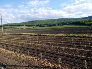 Teren agricol - Livada de meri, depozit