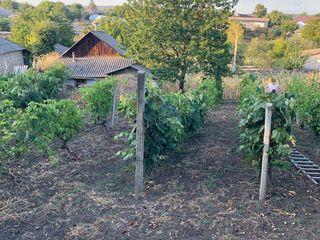 Продается участок с домом, погребом и виноградниками